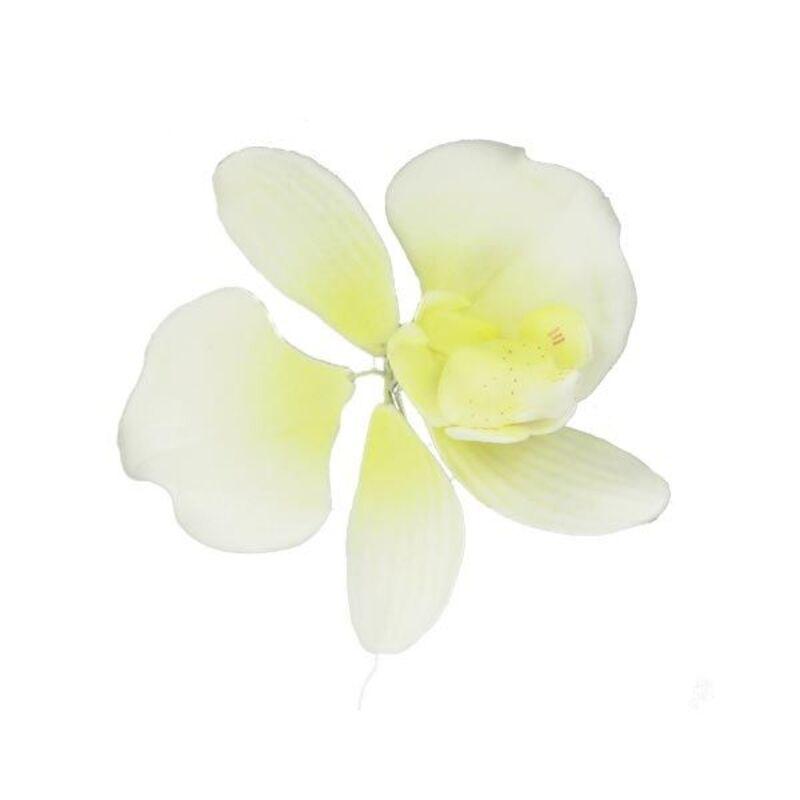 orchidee 5 cm