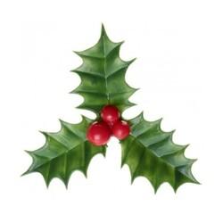Décors Noël houx (x144)