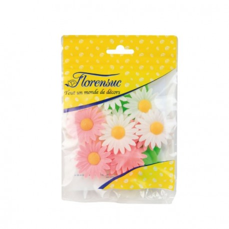 Marguerites assorties (x12)