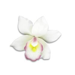 Orchidée blanche en pastillage Gatodéco
