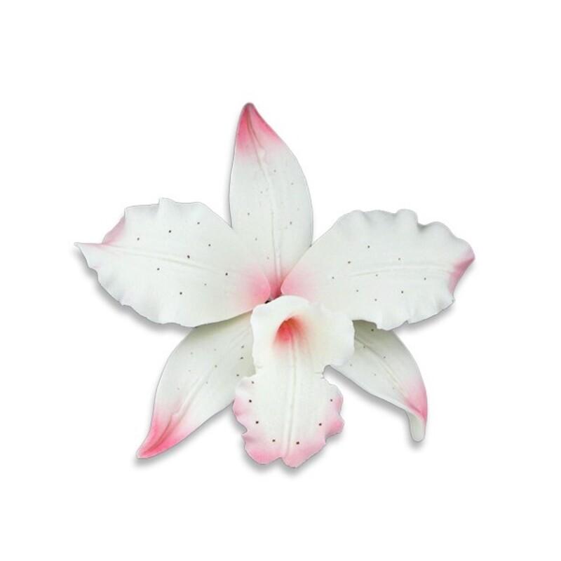 Orchidée Brassavola rose en pastillage Gatodéco