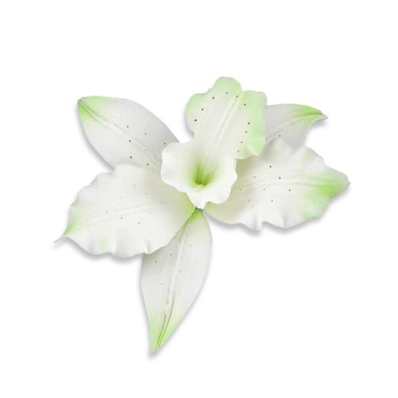 Orchidée Brassavola verte en pastillage