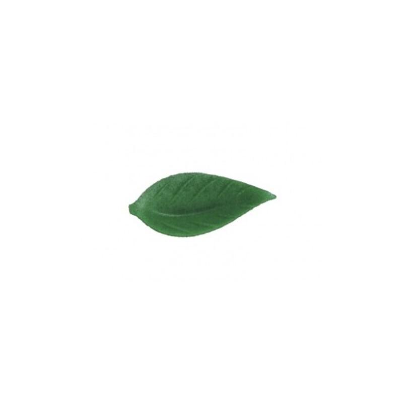 Feuille de liseron vert foncé (x500)
