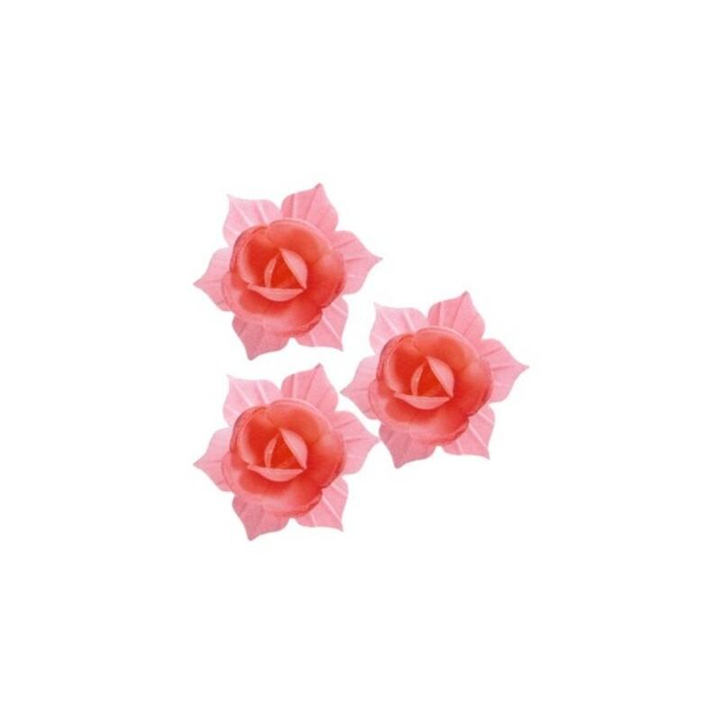 Jonquille carmin et rose (x28)
